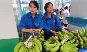 Sinh viên Sài Gòn bán chuối cứu nông dân Đồng Nai
