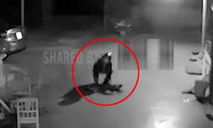 Con chó giãy chết vì dính bả cẩu tặc
