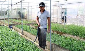 Giảng viên bỏ học tiến sĩ ở nước ngoài về quê trồng rau