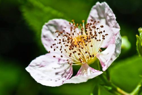 hoa-trong-tieng-anh-2