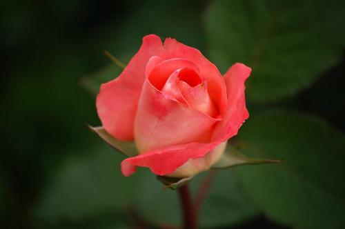 hoa-trong-tieng-anh