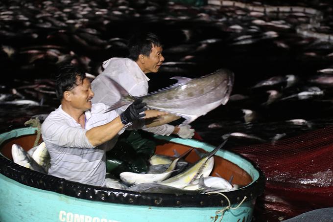 Ngư dân Quảng Trị đưa mẻ cá trị giá 5 tỷ đồng vào bờ