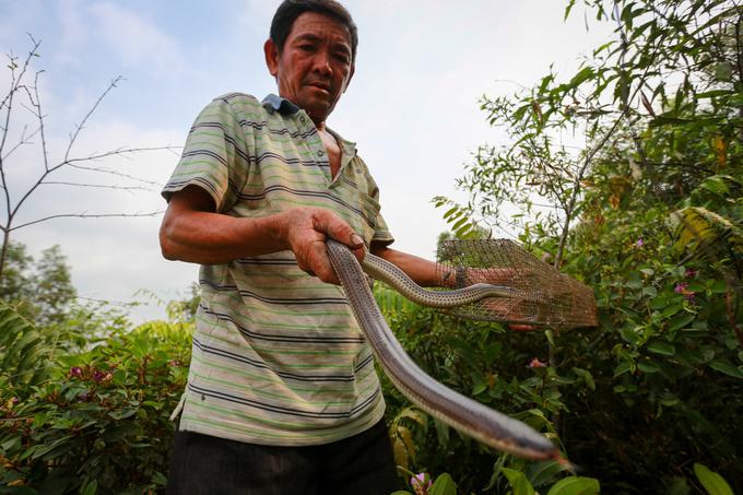 Người đàn ông gần 20 năm săn rắn, bắt chuột ở Sài Gòn