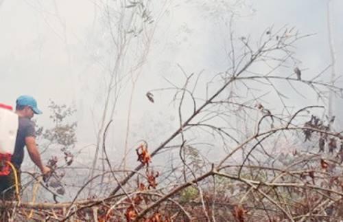 Đám cháy gây thiệt hại khoảng 4.000 m2 rừng