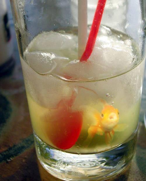 Nước giải khát của loài cá?