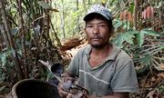 Băng rừng Khánh Lê nhổ nấm linh chi
