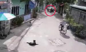 Cẩu tặc vòng xe lại hai lần để bắt một con chó