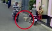 Trộm chó nhanh như chớp trước mặt cô gái