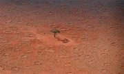Lý giải bí ẩn những vòng tròn thần tiên ở Namibia
