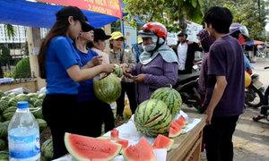Sinh viên 'giải cứu' dưa hấu cho nông dân Quảng Ngãi