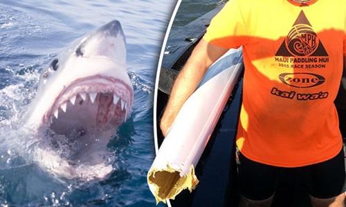 Người đàn ông đi thuyền kayak may mắn thoát chết dù bị cá mập cắn đứt thân thuyền. Ảnh: Daily Star