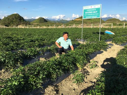 Điều kiện thổ nhưỡng và khí hậu tại Sapa phù hợp để phát triển nhiều giống cây dược liệu quý. Ảnh: Tiến sĩ.