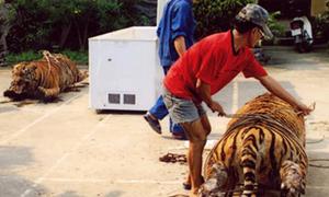 Rao bán công khai 5 triệu đồng một cân thịt hổ