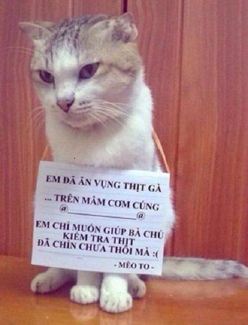 Mèo bị phạt vì giúp chủ.
