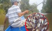 4 sát thủ giật cá rô liên tục bằng mồi ong rừng