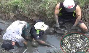 Đám đông bắt được hàng trăm con cá 'lộc trời' ở kênh nước cạn