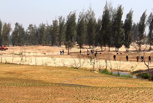 Khu rừng ở TP Tuy Hòa được quy hoạch xây dự án làm sân golf. Ảnh: P.X