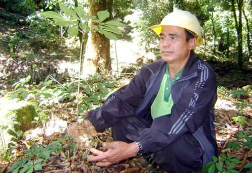 nhung-dai-gia-so-huu-vuon-sam-ngoc-linh-tram-ty-1