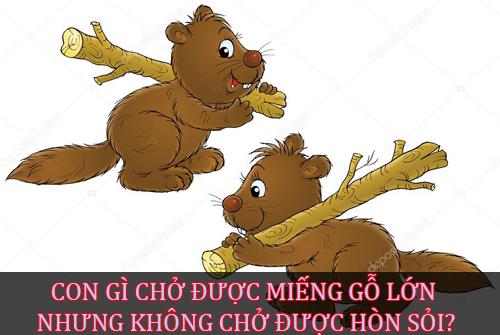 cai-gi-di-nhai-dung-ngam-ngoi-cuoi-3