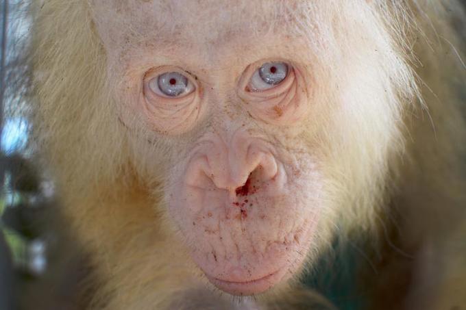 Những 'bóng ma trắng' trong thế giới động vật