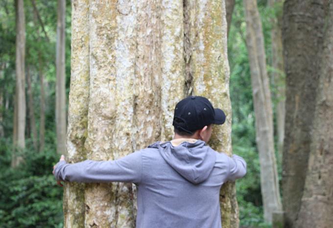 Rừng săng lẻ cổ thụ được dân xứ Nghệ bảo vệ như 'báu vật'