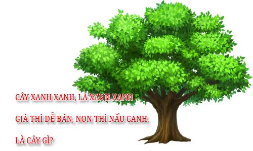 tai-sao-nguoi-lon-an-com-truoc-keng-lai-bi-dau-bung-2