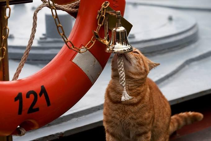 Các 'sĩ quan mèo' trên hạm đội tàu chiến Nga