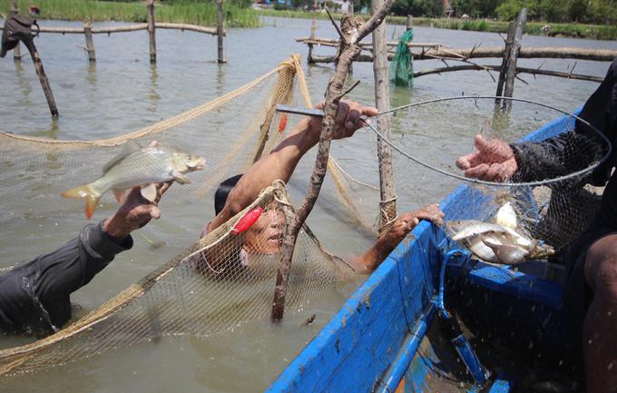 Dỡ chuôm bắt cá bán tiền triệu