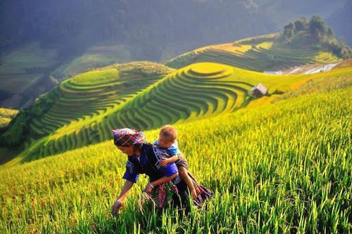 ruong-bac-thang-mu-cang-chai-noi-tieng-the-gioi-o-tinh-nao