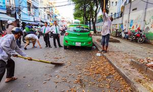 Hái me trên đường Sài Gòn kiếm gần triệu đồng mỗi ngày