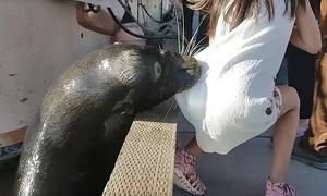 Sư tử biển cắn gấu váy lôi tuột bé gái xuống nước