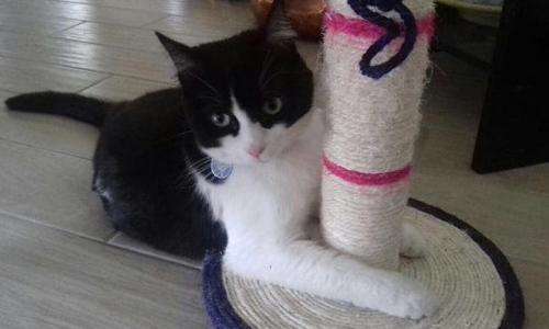 Mèo Fiocco-Tequila là tâm điểm của cuộc tranh cãi. Ảnh: