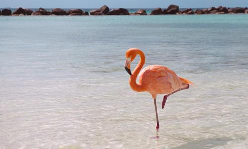 Các nhà khoa học cho rằng tư thế ngủ một chân giúp hồng hạc tiết kiệm sức. Ảnh: National Geographic