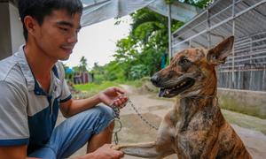 Trại chó Phú Quốc thu 700 triệu đồng mỗi năm ở Sài Gòn