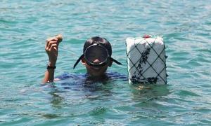 Ngư dân tay không lặn xuống đáy biển bắt ngao