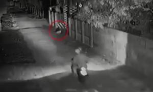 Camera chộp cảnh cẩu tặc dùng súng điện bắt chó