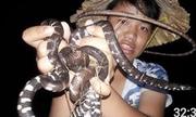 Soi đèn bắt hàng chục con rắn trong đêm ở Sài Gòn