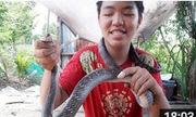Rắn hổ hèo dài 3 mét trốn trong vườn nhà Sài Gòn