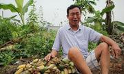 Côn đồ chém nát 3.000 cây chuối của nông dân