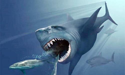 Hình ảnh về loài cá mập khổng lồ từng sống trên Trái Đất. Đồ họa: Newsweek.
