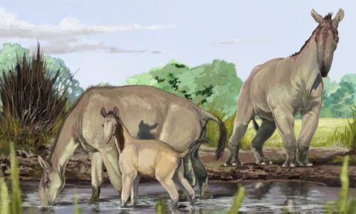 Loài Macrauchenia patachonica đã tuyệt chủng, sống ở Nam Mỹ ở kỷ băng hà cuối. Đồ họa: Jorge Blanco.