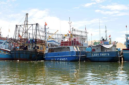 Nhiều tàu vỏ thép mới bàn giàu đã hư hỏng, nằm bờ ở cảng Quy Nhơn. Ảnh: Thạch Thảo