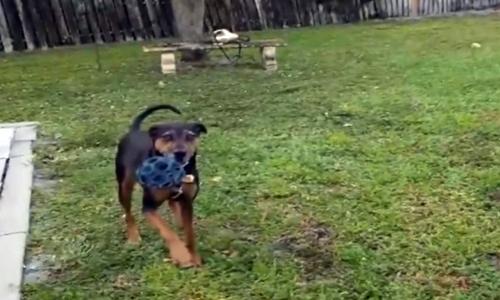 Cô chó Delilah khi chơi ở sân sau gia đình bị đàn ông sát hại. Ảnh chụp màn hình: Inside Edition.