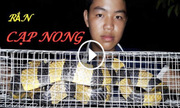 Bẫy rắn cạp nong cực độc ở Sài Gòn