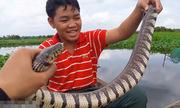 Bẫy rắn ri voi khủng ở đầm hoang Sài Gòn