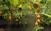 Công ty Nhật trồng 280 loại cây trong văn phòng