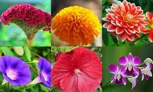 Các loài hoa quen thuộc ở Việt Nam trong tiếng Anh