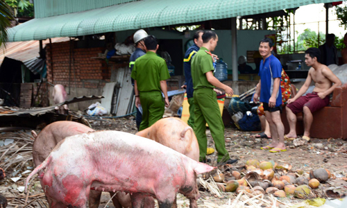 Hơn chục con heo bị thiêu chết trong trận hỏa hoạn ở Sài Gòn