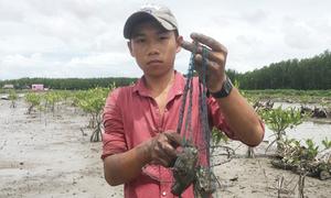 Lội sình rừng ngập mặn đặt bẫy bắt cá thòi lòi