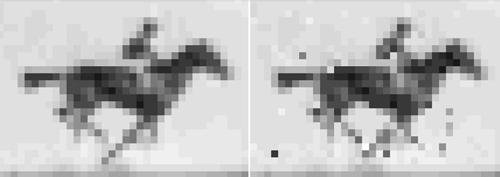 Hình gốc từ bộ phim đen trắng và hình khôi phục từ ADN của vi khuẩn. Ảnh: Seth Shipman.